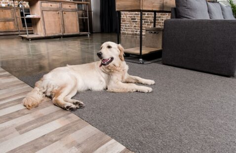 Best Types of Floors For Dogs